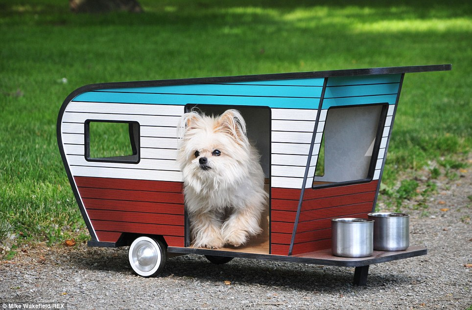 7 tips for RVing and traveling with pets, making life easier for everyone